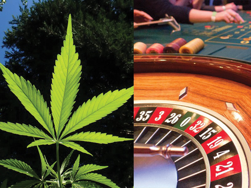 Image result for marijuana and gambling
