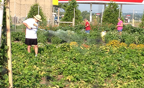 Community gardens can help individuals provide food for their families during the growing season. (Word & Way file photo)