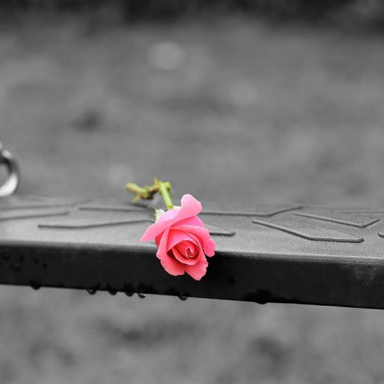 pink rose on swing