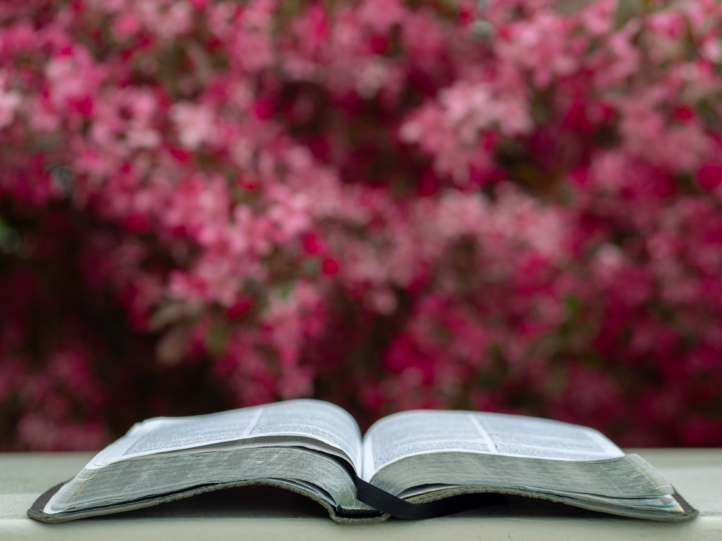 Bible in Spring